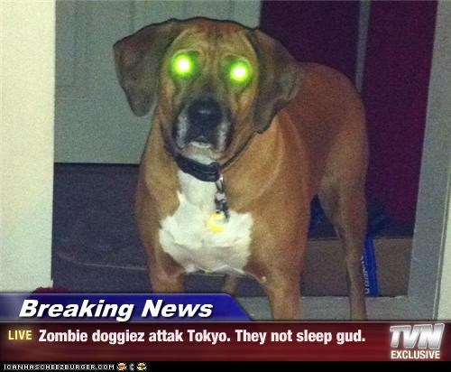Breaking News - Zombie doggiez attak Tokyo. They not sleep gud.