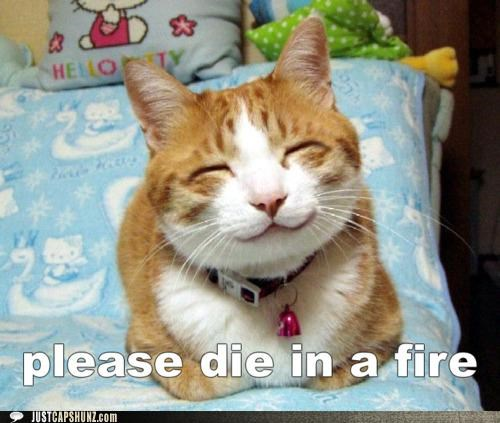 best of the week,cat,Hall of Fame,hateful,I Can Has Cheezburger,Kill It With Fire,please die in a fire,rude hate