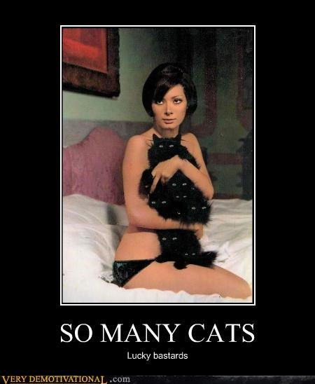 Cats,classy,hilarious,Sexy Ladies,wtf