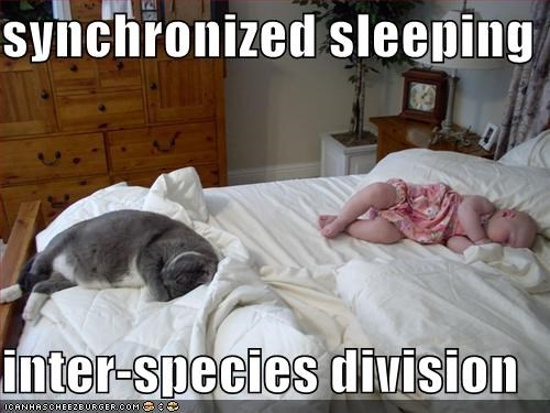 baby,lolcats,sleeping,synchronized
