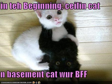 in teh Beginning, ceilin cat  n basement cat wur BFF