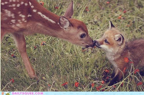 claw,dawww,deer,fawn,fox,friends,friendship,Hall of Fame,Interspecies Love,kissing,kit,love,pun,red,tooth