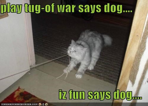 play tug-of war says dog....  iz fun says dog....