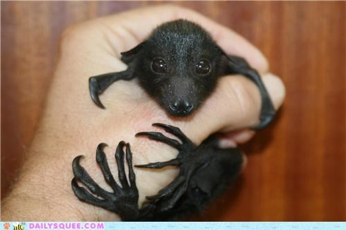 Probably Not the Right Way to Hold a Baby Bat...