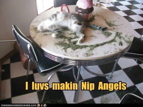 Lolcats: Deyz Teh Bestest Kind ob Angels!