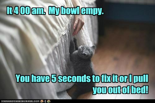 breakfast,cat,food,get up,lolcat,morning,nom,wake up
