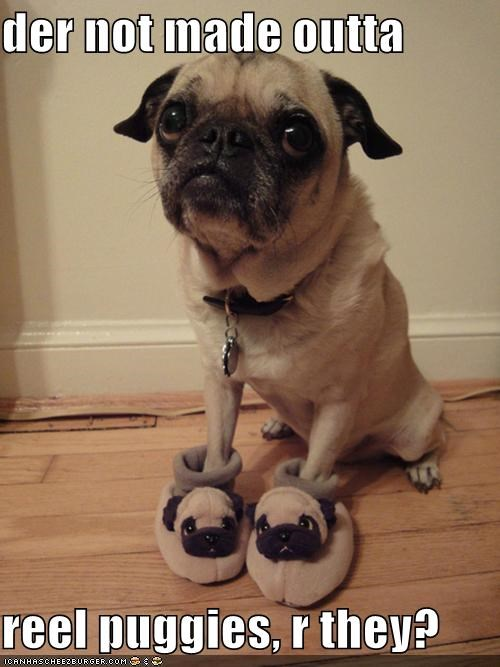 are you sure,clothes,clothing,curious,pug,pug slippers,real puggies,slippers,worried