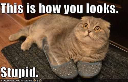 animals,appearance,Cats,fashion,I Can Has Cheezburger,impressions,shoes,stupid