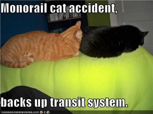 Monorail cat accident,  backs up transit system.