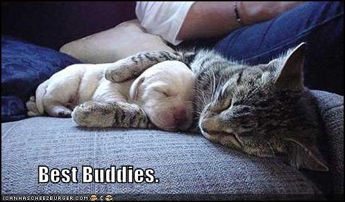 Best Buddies.