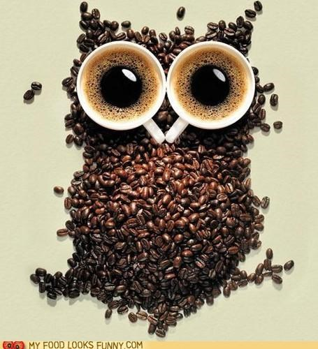 beans,best of the week,caffeine,coffee,cups,eyes,Owl