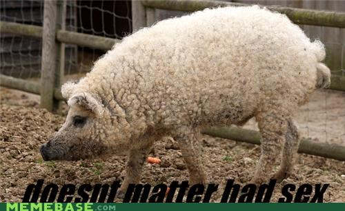 A Pig in Sheep's Clothing