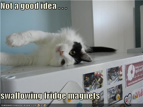 caption,captioned,cat,do not want,fridge,good,idea,magnet,magnets,not,refrigerator,regret,stuck,swallowing