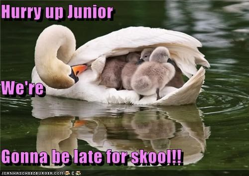 Hurry up Junior We're Gonna be late for skool!!