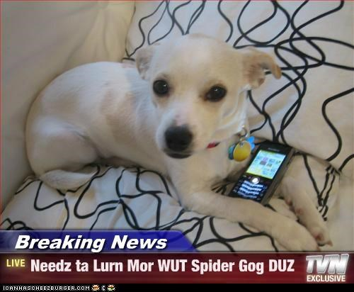 Breaking News - Needz ta Lurn Mor WUT Spider Gog DUZ