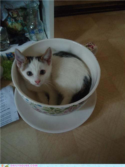 cat,confused,cup,disobedient,get out,kitten,meme,pot,reader squees
