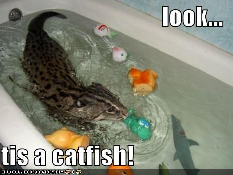 look...  tis a catfish!