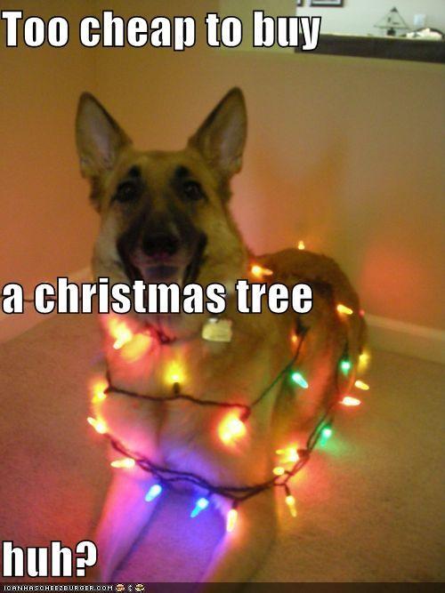 Too cheap to buy a christmas tree huh?