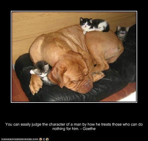 asleep,best friends,bull mastiff,Cats,character,friends,kitten,love,nap,protector,sleep