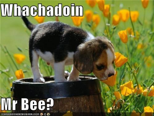 Whachadoin  Mr Bee?