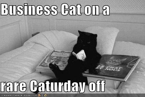 Business Cat on a   rare Caturday off