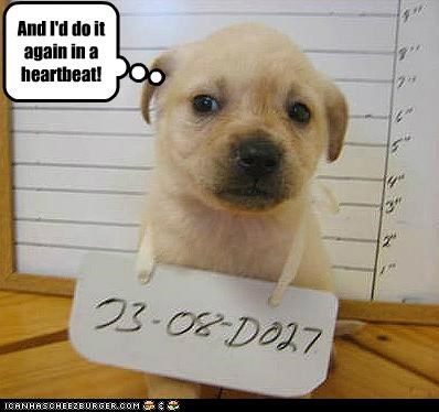 animals,crimes,dogs,i has a hotdog,jail,prison,puppies,remorse,under arrest,unrepentant