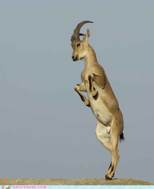 acting like animals,dance dance dance,ibex,lykki li,lyrics,parody,rewrite,song