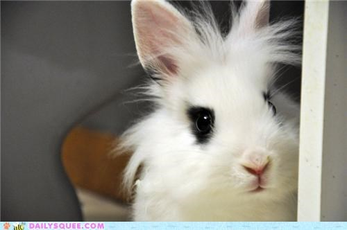 baby,bunny,growing up,grown up,happy bunday,little,rabbit,reader squees,remembering,reminiscing,small,wishing,young