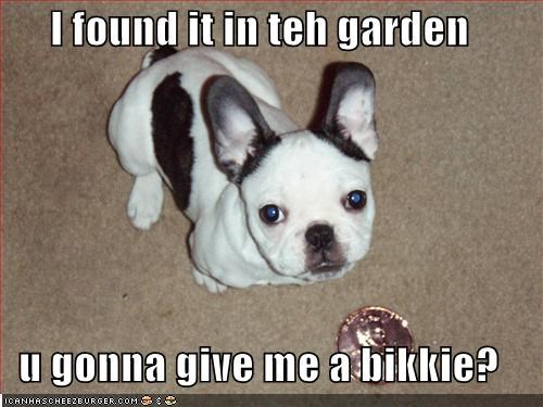 I found it in teh garden  u gonna give me a bikkie?