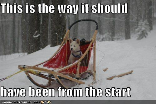 husky,mush,sled,sled dog,sleigh,snow,winter