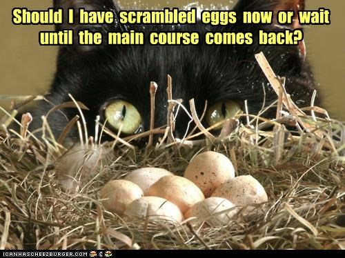 back,bird,caption,captioned,cat,comes,decision,egg,eggs,have,I,main course,now,options,returns,scrambled,should,wait