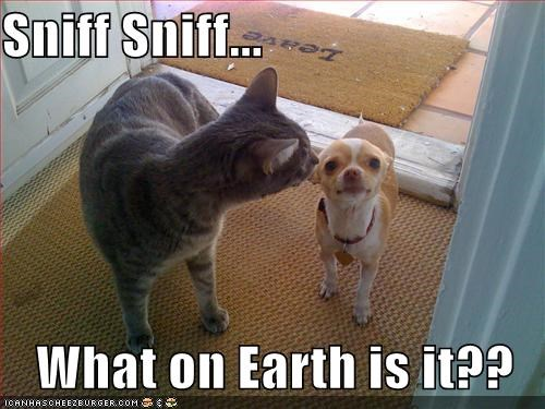 Sniff Sniff...  What on Earth is it??