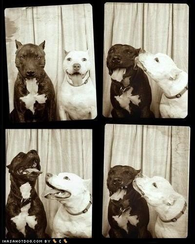 17 Pictures of Goggies in Photo Booths