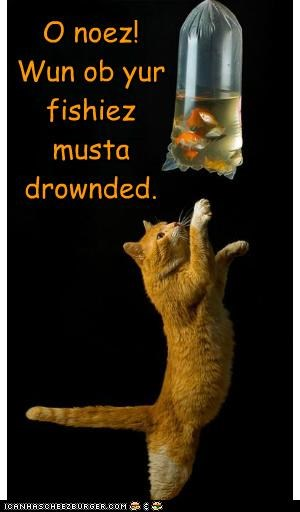 O noez! Wun ob yur fishiez musta drownded.