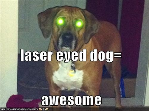 laser eyed dog= awesome