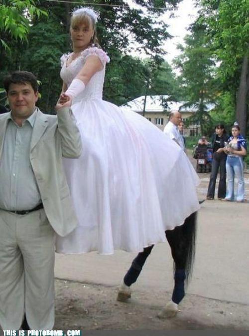 Awkward,bride,horse,minotaur,wedding