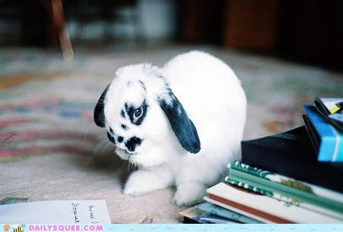 book,book club,books,bunny,for serious,happy bunday,idea,rabbit,reading,reading is sexy,starting
