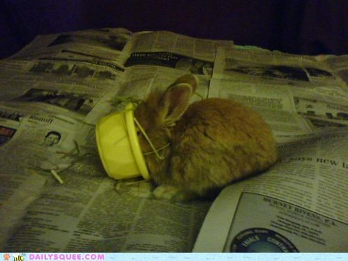 bunny,decorum,dish,eating,face,face first,food,happy bunday,hungry,nomming,noms,rabbit,reckless abandon,whatever