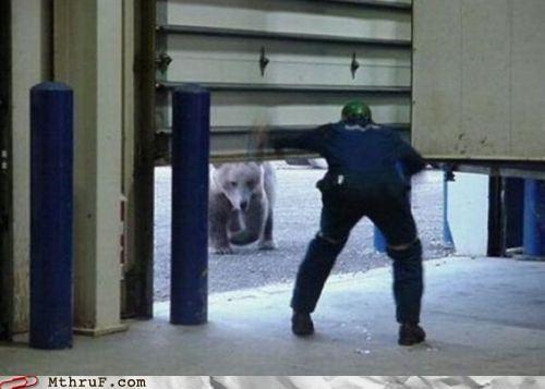 bear,door,garage door,warehouse