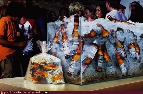 beer,fish,good idea,priorities,wtf