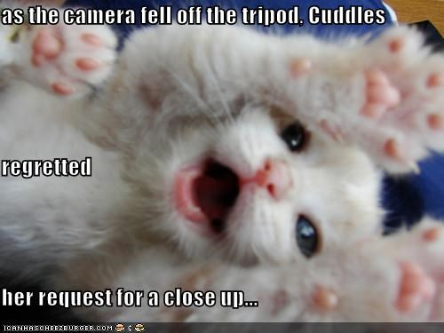 animals,cameras,Cats,closeup,crushed,I Can Has Cheezburger,mr-demille,oh noes,tragedy