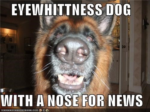 EYEWHITTNESS DOG  WITH A NOSE FOR NEWS