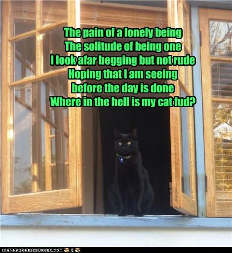 begging,caption,captioned,cat,ending,food,location,lonely,noms,pain,poem,question,rude,solitude,twist