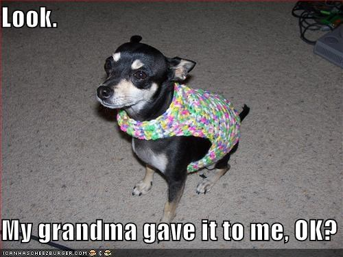 chihuahua,clothes,clothing,gift,grandma,grandmother,knit,present,sweater