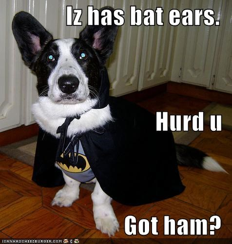 Iz has bat ears. Hurd u Got ham?