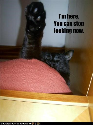 caption,captioned,cat,here,location,looking,now,paw,raising,stop