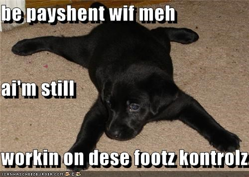 be patient,Black Lab,feet,foot,foot controls,labrador retriever,laying down,patience,puppy