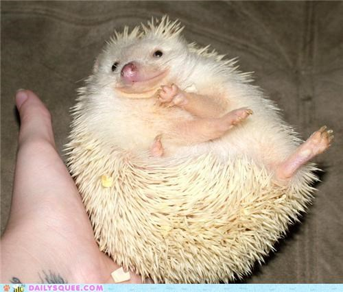 esme,happy,hedgehog,hoping,joanna newsom,name,reader squees,smile,smiling,song