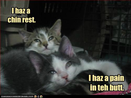 butt,caption,captioned,cat,Cats,chin,i has,kitten,pain,perspective,rest