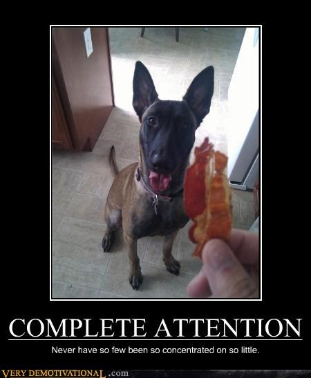 COMPLETE ATTENTION